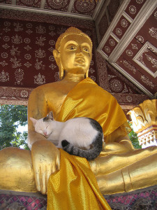 animals, buddha and cat via Jen C.