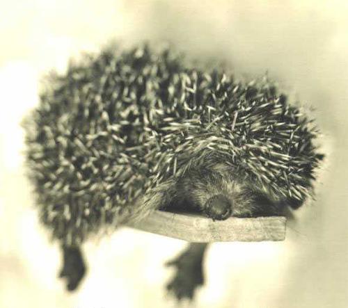 animals, by Rachael Hale