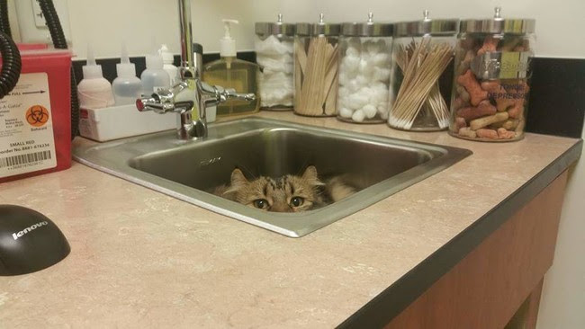 Hiding at the vets