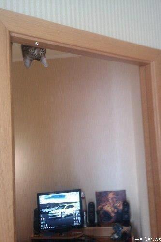 animals, cat upsidedown