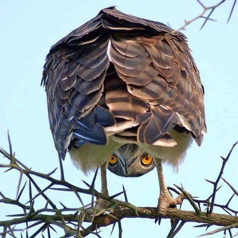 animals, owl cool