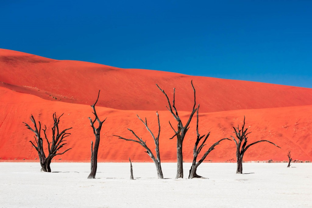 Dead Vlei, Namibia: withered trees hundreds of years old anchored in a white-clay pan, standing in striking contrast to an intensely colored, towering sand dune - by Carsten Kruger