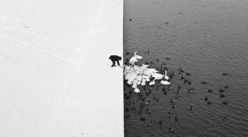 This striking image of a man feeding  swans contrasting snow and water, man and swans was taken in Krakow, Poland. The black and white effect  provides a perfect balance.  By Christopher Jobson.