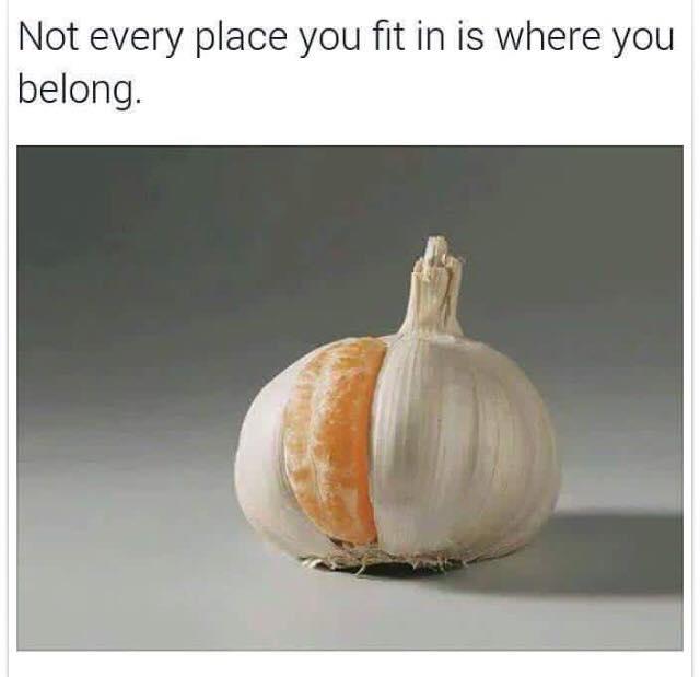 human ingen
