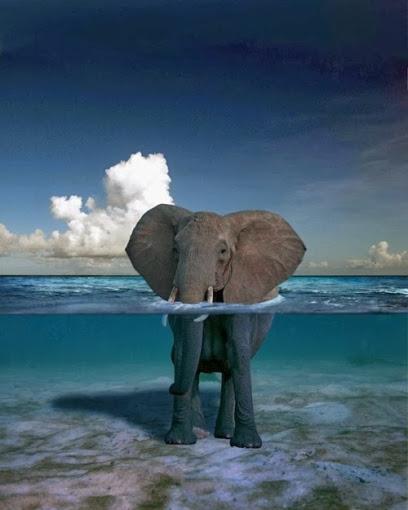 animal, elephant