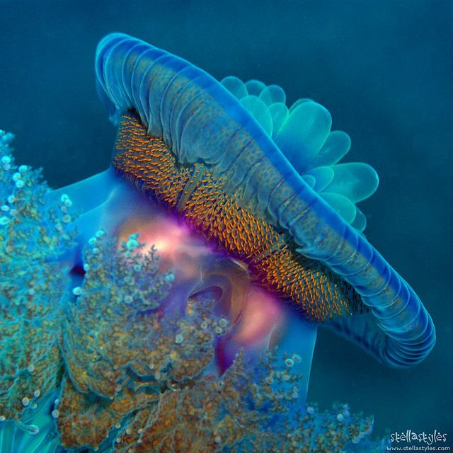 Berenice, Red Sea, Egypt. by Stella Styles