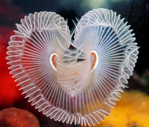 sea, Under the sea heart