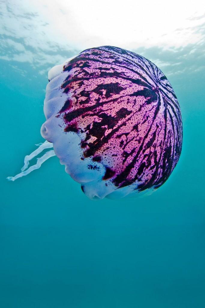 sea, jelly via pint