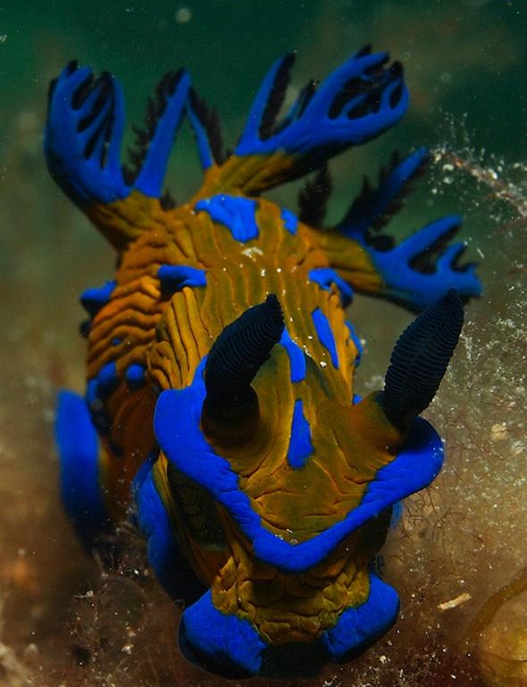 sea, sea slug 3
