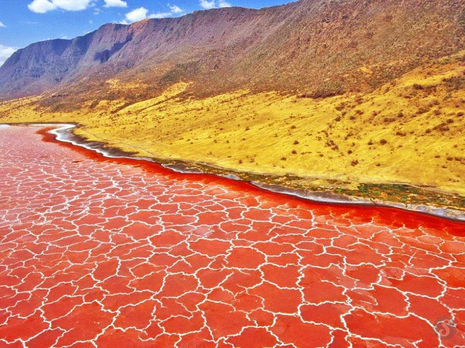 Lake Natron, Tanzania. As water evaporates during the very hot and dry season, salinity levels increase to the point that salt-loving microorganisms begin to thrive. The red pigment in the organisms produces the deep reds of the open water of the lake and the orange colors of the shallow parts of the lake.