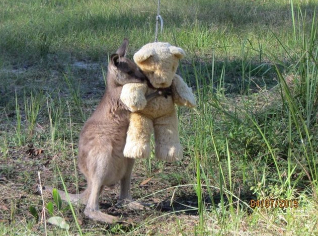 animals, Kangaroo-Hug-teddy-Gillian-Abbott-released via g.n.n. see word