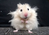 animals, mouse (2)