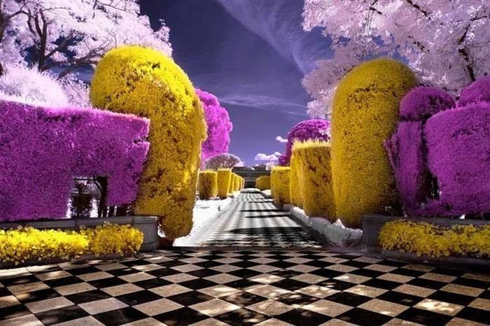 An infrared photo of a garden. This is how a bee sees, via National Geographic