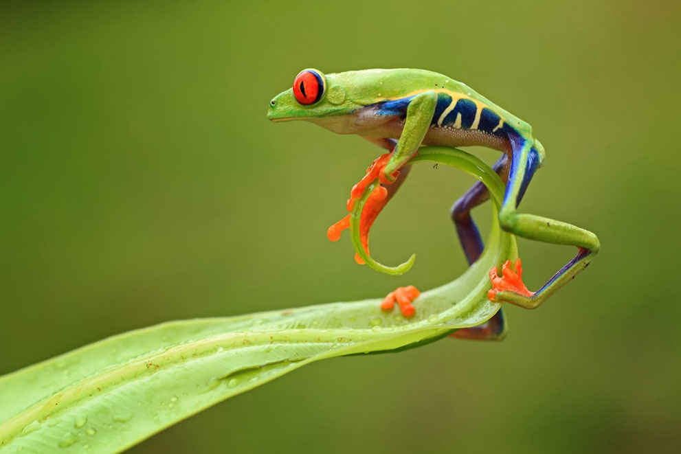 animal-frognat-geo