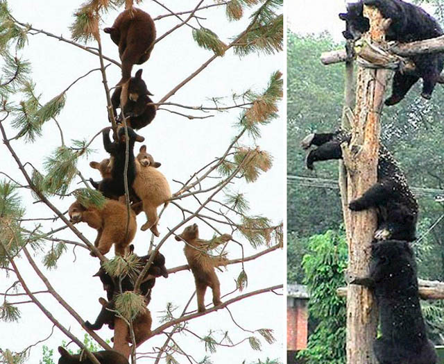 animals-bears-via-drb-2