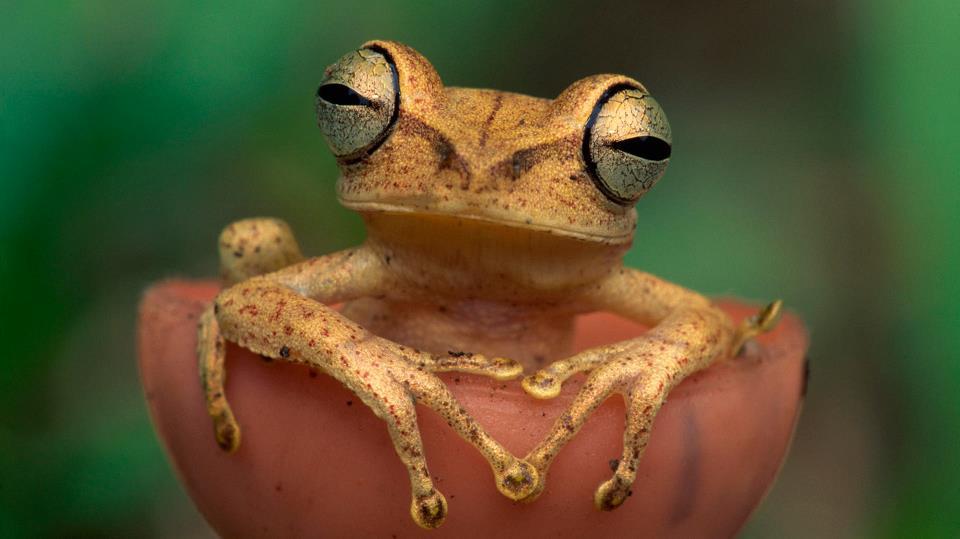 animals-frog