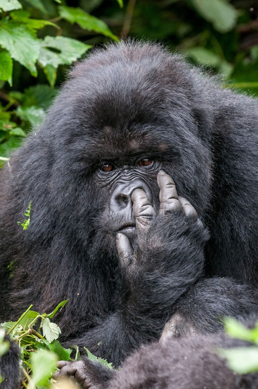 Amusing Animals | Dusky's Wonders
